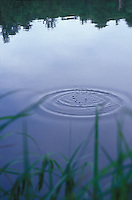 Ripple on still water through grasses<br />