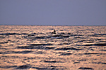 Man In Dugout Canoe