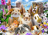 Howard, REALISTIC ANIMALS, REALISTISCHE TIERE, ANIMALES REALISTICOS, paintings+++++,GBHR947,#a#, EVERYDAY ,selfies