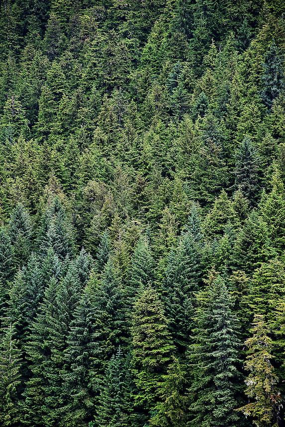 Boreal forest , Alaska, USA
