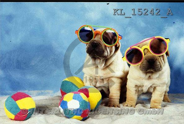 Interlitho, ANIMALS, dogs, photos(KL15242/A,#A#) Hunde, perros