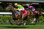 Jockey #8 Zac Purton riding Sky Melody during Hong Kong Racing at Happy Valley Racecourse on September 05, 2018 in Hong Kong, Hong Kong. Photo by Yu Chun Christopher Wong / Power Sport Images
