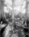 Black and white Pinhole photograph of a large banyan tree at the Thomas Edison Estate in Fort Myers, Florida.