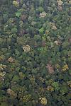 forêt amazonienne vue d'avion.moutonnement de brocolis à perte de vue