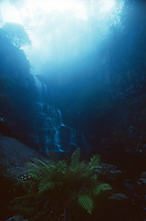 A hidden Waterfall shrouded in Mist in the Blue Mountains, New South Wales, Australia