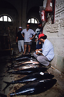 ITALY, Sicily, Egedian island Favignana, La Mattanza, traditional fishing of bluefin Tuna fish, catch of the day in the Tonnara