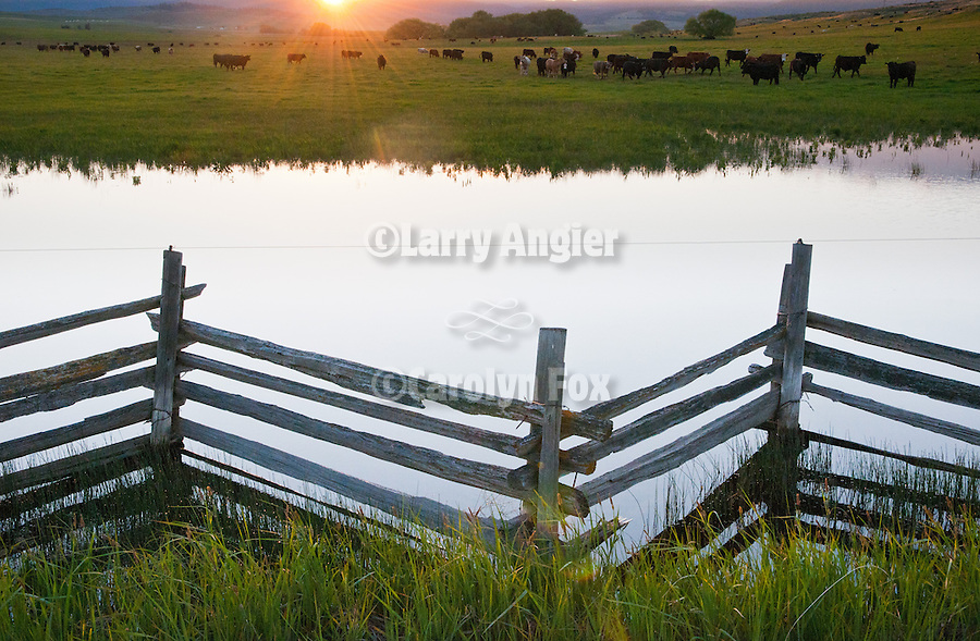 Zig zag stacked rail fence with pond and grazing cattle at a ranch near North Powder, Ore.