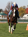Courageous Cat , trained by Bill Mott and to be ridden by Pat Valenzuela , exercises in preparation for the 2011 Breeders' Cup at Churchill Downs on October 31, 2011.