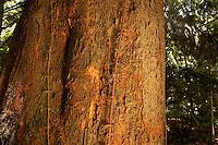 Árvore da Copaíba no paque do Museu Emílio Goeldi.<br /> Belém, Pará, Brasil.<br /> Foto Paulo Santos<br /> 2002<br /> <br /> CARACTERÍSTICAS FÍSICO-QUÍMICAS E COMPOSIÇÃO DE GRAXAS<br /> <br /> A composição química do óleo-resina de copaíba pode ter aproximadamente 72 sesquiterpenos (hidrocarbonetos) e 28 diterpenos (ácidos carboxílicos), sendo o óleo composto por 50% de cada tipo de terpenos. Aos diterpenos são atribuídas a maioria das propriedades terapêuticas, fato comprovado cientificamente. Aos sesquiterpenos é atribuída a fração responsável pelo aroma do óleo-resina de copaíba bem como algumas propriedades como antiúlcera, antiviral e anti-rinovírus. Pesquisadores constataram que o óleo de copaíba apresenta ação antiinflamatória. Esse potencial se mostrou duas vezes maior que o encontrado no diclofenaco de sódio, um dos medicamentos mais utilizados no mercado.