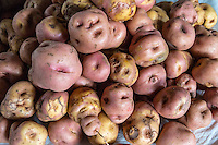 Peru, Cusco, San Pedro Market.  One of the many varieties of Peruvian potatoes.