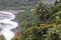 An African tulip tree seen near Honomanu Bay on the winding road to Hana, Maui.