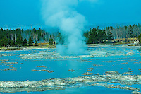 Great Fountain Geyser on Firehole Lake Drive in Yellowstone National Park