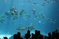Visitors view sharks and many other marine fish species in the Ocean Voyager Tank at the Georgia Aquarium in Atlanta, GA. No MR