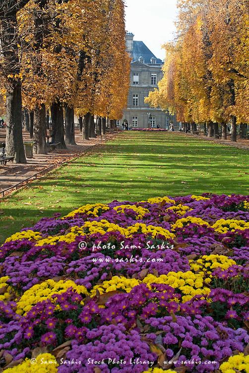 Vibrant flowers in full bloom during autumn in Tuileries Garden, Paris, France.