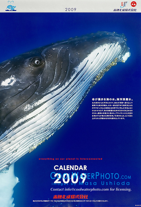 Akahokasei Corporation, year 2009 corporate calendar, cover use, Japan, Image ID: Humpback-Whale-0138