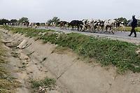 TURKEY Manisa, dry irrigation canal and milk cows on the road / TUERKEI Manisa, trockener Bewaesserungskanal und Kuhherde auf der Strasse
