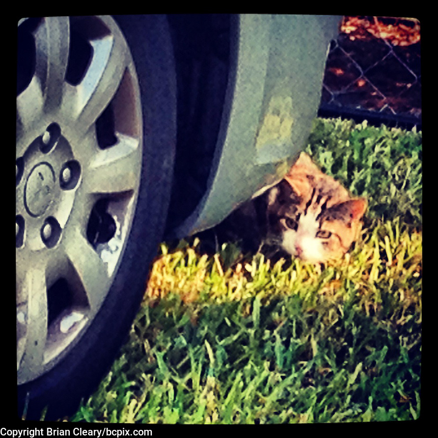 A cat peeks out from behind a parked car, iPhone photo from the Instagram photostream of bcpix, Florida-based freelance photographer Brian Cleary.  (Photo by Brian Cleary/www.bcpix.com)