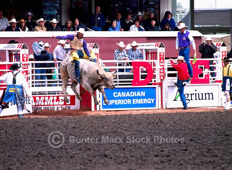 Rodeo Cowboy riding Bucking Bull at Calgary Stampede, Calgary, Alberta, Canada - Editorial Use Only