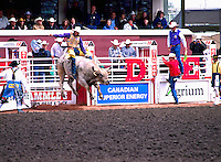 Rodeo Cowboy riding Bucking Bull at Calgary Stampede, Calgary, Alberta, Canada - Editorial Use Only