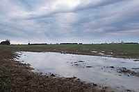 11/12/2020 Standing water on a drilled field in Lincolnshire <br /> ©Tim Scrivener Photographer 07850 303986<br />      ....Covering Agriculture In The UK....
