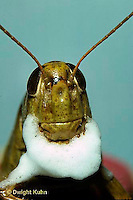 GF05-002b  Funny Grasshopper - preparing to shave