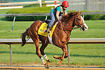 Shackleford on the Churchill Downs track on April 30, 2011.