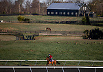 November 2, 2020: Glass Slippers, trained by trainer Kevin A. Ryan, exercises in preparation for the Breeders' Cup Turf Sprint at Keeneland Racetrack in Lexington, Kentucky on November 2, 2020. Alex Evers/Eclipse Sportswire/Breeders Cup