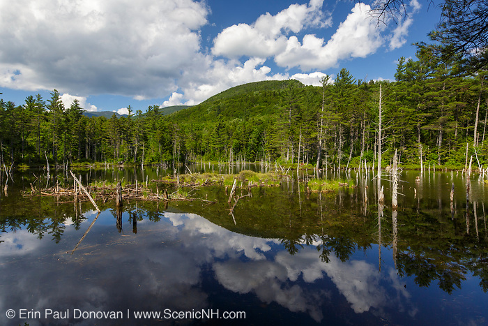 Reflection of mountains in a beaver Pond along Franconia Brook Trail in the Pemigewasset Wilderness of New Hampshire during the summer months. This trail follows the Franconia Branch of the old East Branch & Lincoln Railroad (1893-1948).