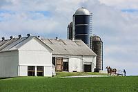 Amish farmer hitches a horse drwan cart on his farm, Gordonville, Lancaster, Pennsylvania, USA