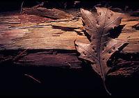 Single dried leaf on top of log<br />