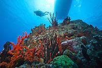 Savanna Goodman<br /> Wreck of the Rhone<br /> Salt Island BVI