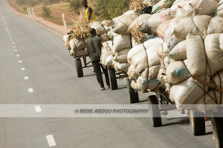 Young men from the village lead donkeys pulling carts of cooking ingredients, like baobab leaves, okra, and hibiscus, on the long road from Torodi to Niamey, Niger.  They will travel day and night 60 kilometers to the capital on a one-way, one-week journey.