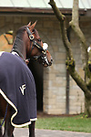 31 October 2009 Lentenor Debut at Keeneland.Lentenor calm and collected in the paddock before the 5th race at Keeneland.