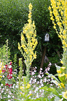 Vogelfreundlicher Garten, Naturgarten, Insektenfreundlicher Garten, blütenreich, Königskerze, Königskerzen, Lichtnelke, Blumenbeet, Nistkasten, Meisenkasten
