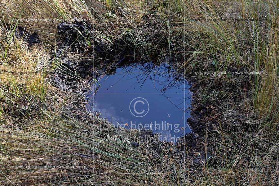GERMANY, lower saxonia, Forest / DEUTSCHLAND, Niedersachsen, Lüneburger Heide, Wald und Moor, Ottermoor, Torf Boden