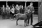 Southall weekly Wednesday Horse market London 1983.<br />