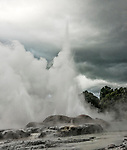 Eruption of the Pohutu Geyser, located at the Te Puia Geothermal Valley, Rotorua, New Zealand. The Pohutu Geyser is the largest geyser in the southern hemisphere.