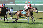 """September 27, 2014: Stephanie's Kitten with John Velazquez win the 37th running of the $600,000 Grade I Flower Bowl Stakes, a """"Win and You're In"""" for fillies & mares, 3-year olds & up, going 1 1/4 mile on the turf, at Belmont Park. Trainer:Chad C. Brown . Owner: Kenneth and Sarah Ramsey . Sue Kawczynski/ESW/CSM"""