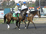 December 10, 2011.Mi Vida approaching the starting gate before the Hollywood Starlet at Hollywood Park, Inglewood, CA