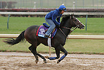 State of Play , trained by Graham Motion and to be ridden by Ramon Dominguez , exercises in preparation for the 2011 Breeders' Cup at Churchill Downs on November 4, 2011.