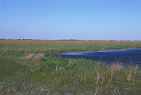 Everglades grasses and river<br />