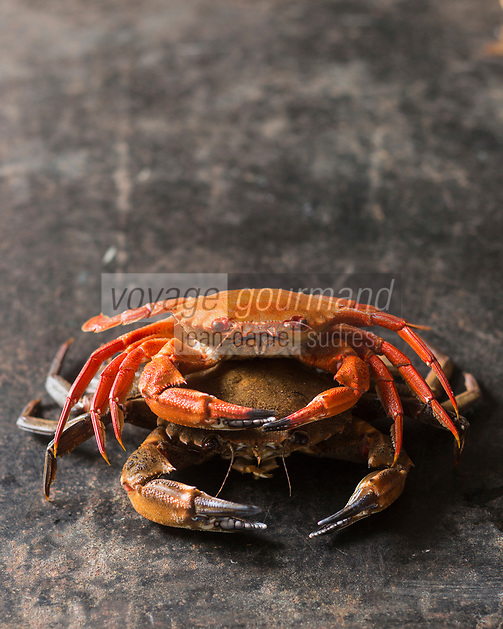 Gastronomie générale: Etrilles - Stylisme : Valérie LHOMME  // The velvet crab, alternatively velvet swimming crab, devil crab or lady crab, Necora puber, is a species of crab.