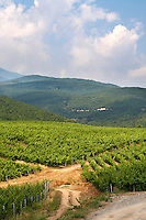 Vineyard. Kir-Yianni Winery, Yianakohori, Naoussa, Macedonia, Greece
