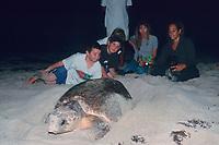 young beachgoers watch as loggerhead sea turtle, Caretta caretta, covers nest, Juno Beach, Florida, Atlantic Ocean