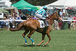 25 Apr 2009: Good Night Shirt, ridden by Willie Dowling, canters down to the start of the second race at the Foxfield Races in Charlottesville, Virginia.