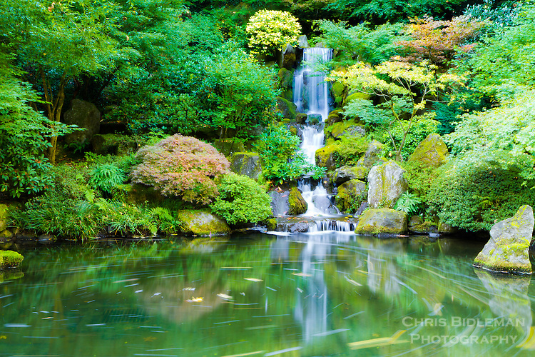 Timed exposure of leaves in pond of Heavenly Falls in the Portland Japanese Garden during the Fall