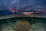 Shallow corals split level at sunset