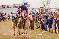 asia,India,Punjab, Anandpur Sahib, Nihang or Sikh warriors seen performing acts on horses during the annual fair of 'Hola Mohalla'
