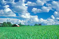 Oats, barn and clouds. Near Monroe, Oregon