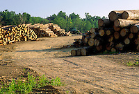 Logs awaiting processing at a sawmill near Madisonville, Kentucky. Madisonville Kentucky.